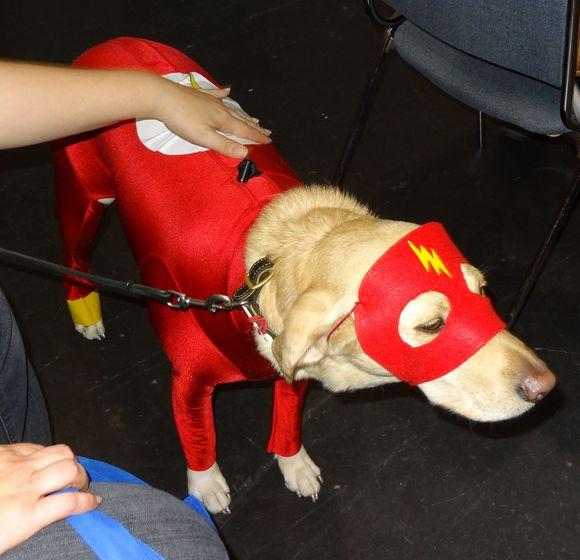 Comic Con dog