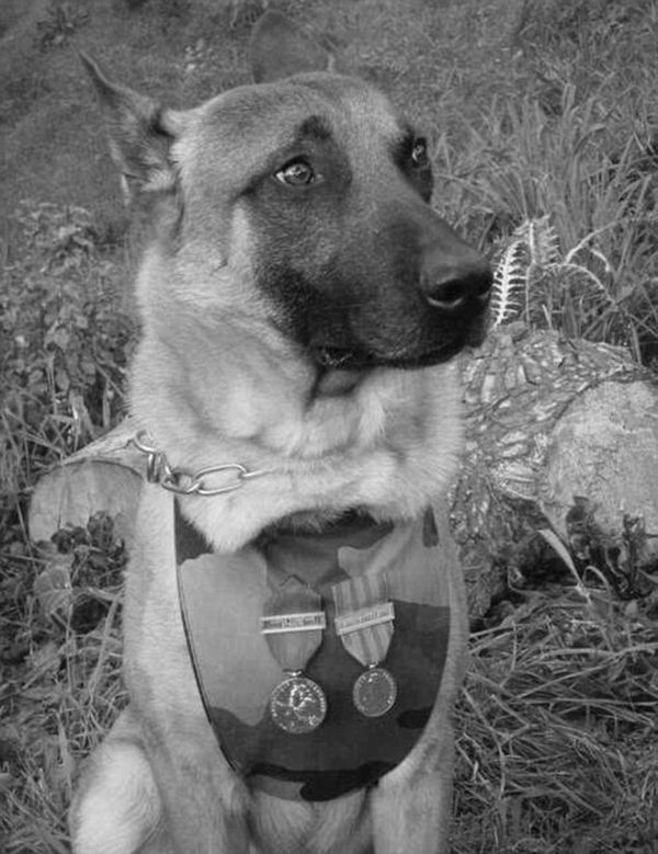 2E912A0500000578-3323495-Decorated_Seven_year_old_police_dog_Diesel_pictured_with_her_ser-m-10_1447856115796
